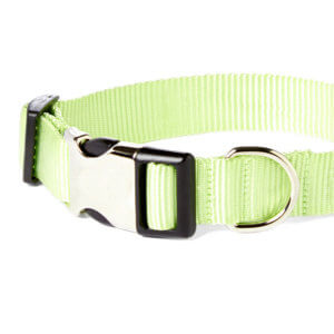 lime dog collar detail