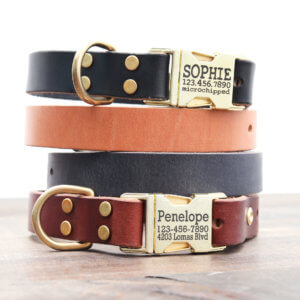 brass personalized-leather-dog-collar
