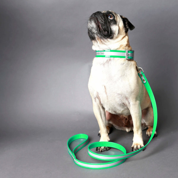 green reflective collar -- pug