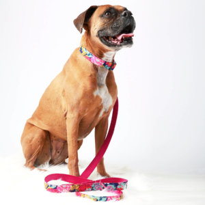 Boxer Dog COllar