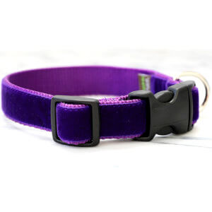 prince purple dog collar