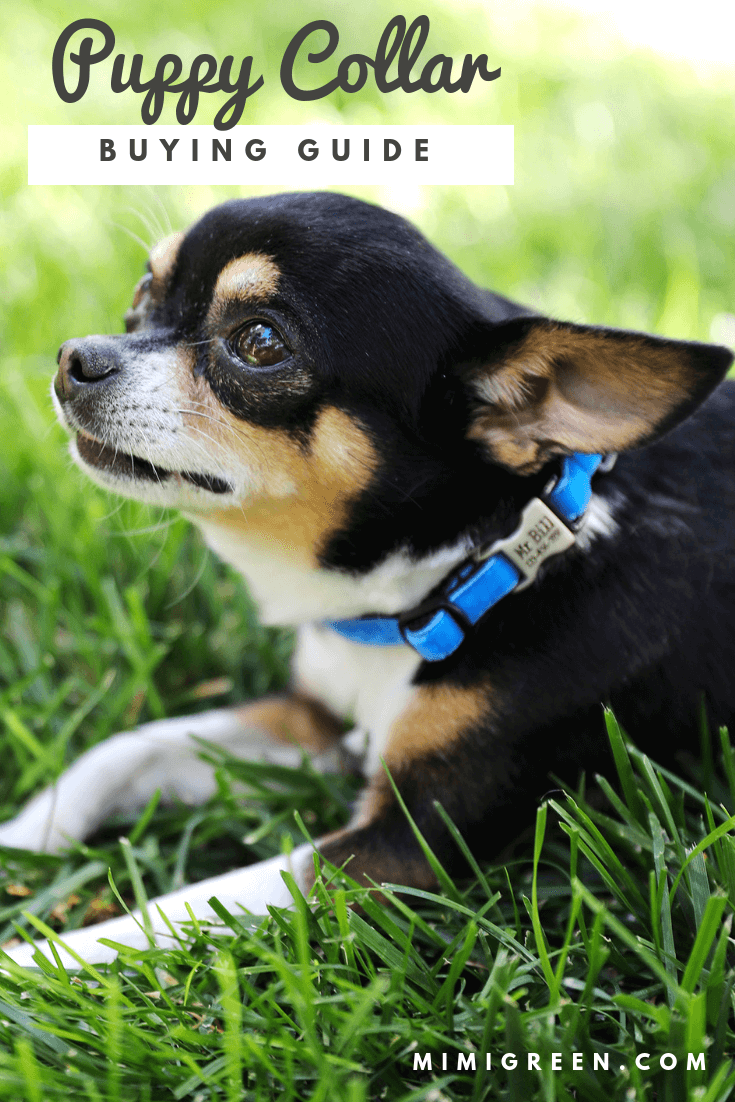 puppy collars how to choose one
