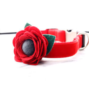 poppy dog collar flower red