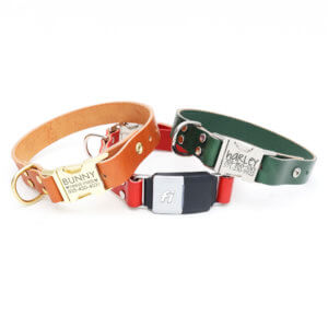 Leather Fi dog collar personalized